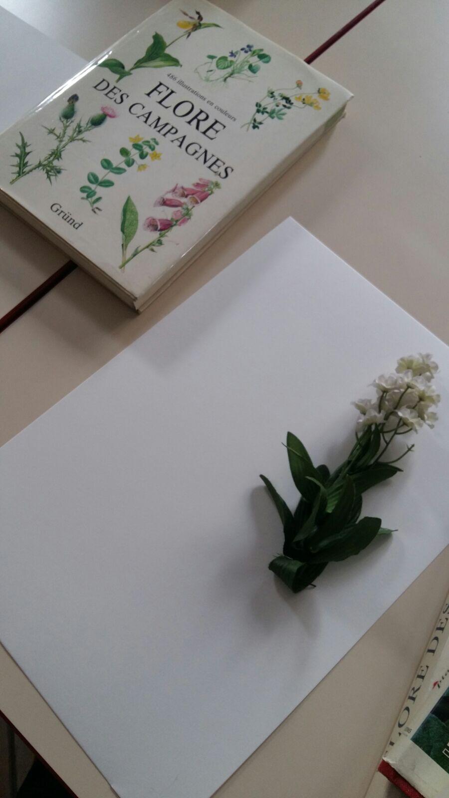 herbier-artificiel2-ingrid-paola-amaro-2016
