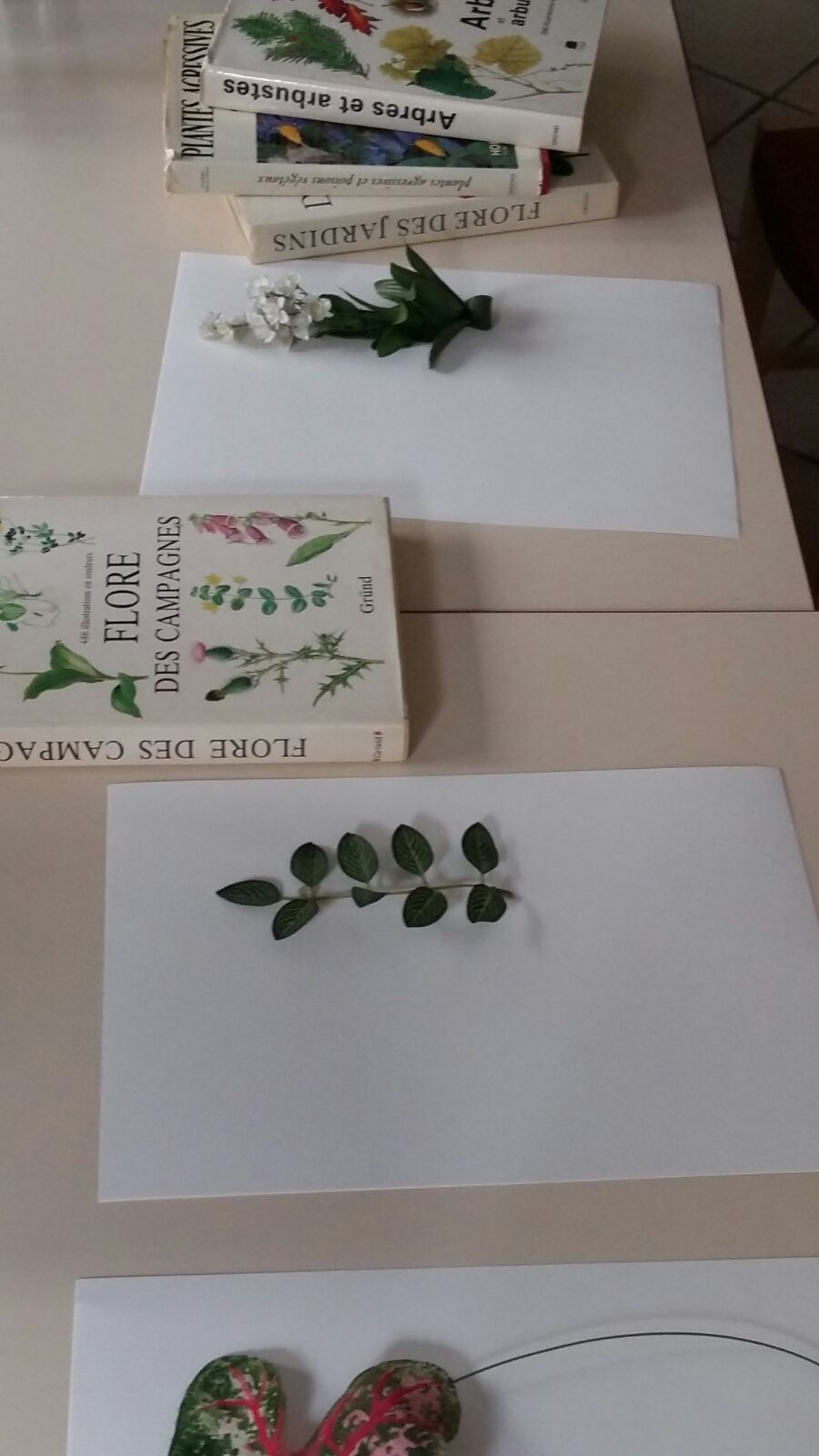 herbier-artificiel4-ingrid-paola-amaro-2016