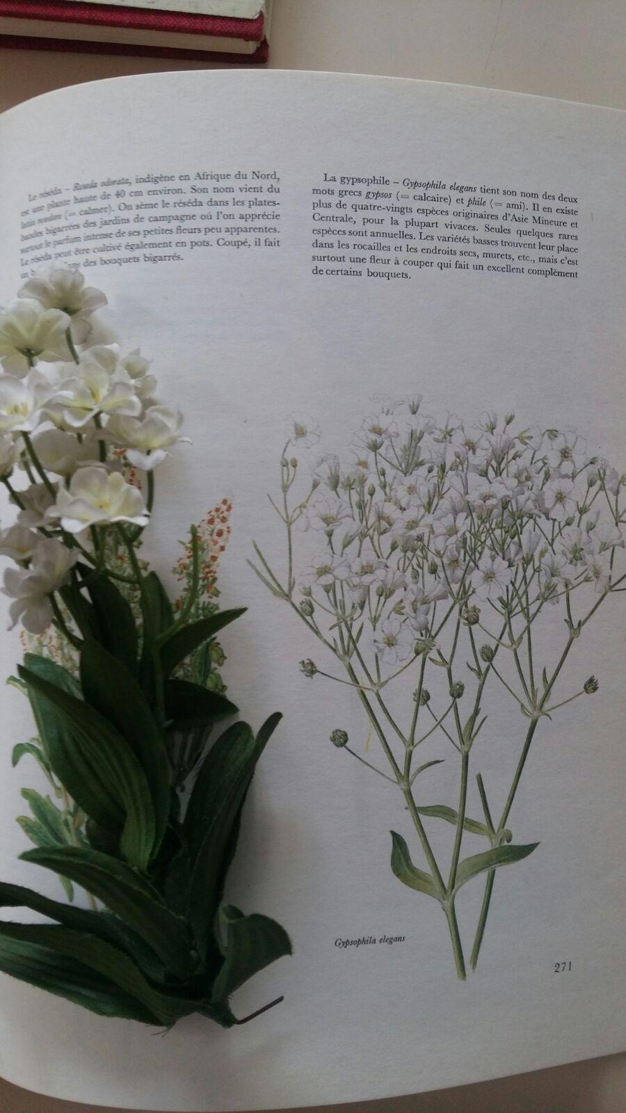 herbier-artificiel6-ingrid-paola-amaro-2016